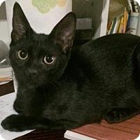 Adopt A Pet :: Gillian - Broomall, PA