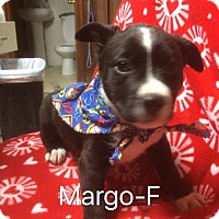Adopt A Pet :: Margo - Buffalo, NY