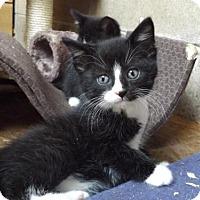 Adopt A Pet :: wizard - Zaleski, OH