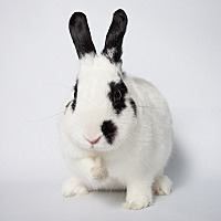 Other/Unknown Mix for adoption in Los Angeles, California - Sparkle