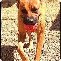 Adopt A Pet :: Inga - Johnson City, TX