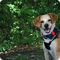 Adopt A Pet :: Scooter - New Castle, PA