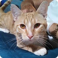 Adopt A Pet :: Lumen - Scottsdale, AZ