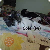 Adopt A Pet :: Cole - West Orange, NJ