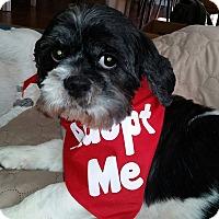 Adopt A Pet :: Bev - Mount Gretna, PA