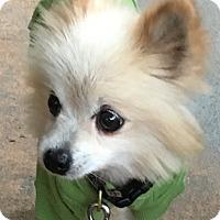 Adopt A Pet :: Hannah - McLoud, OK