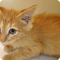 Adopt A Pet :: Beverly - Wildomar, CA