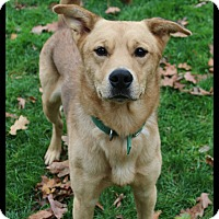 Adopt A Pet :: Gage - Shippenville, PA