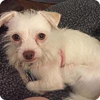 Adopt A Pet :: Hugh - Houston, TX