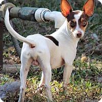 Adopt A Pet :: ASH - Grand Island, FL