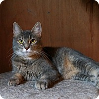 Adopt A Pet :: Annie - Manitowoc, WI