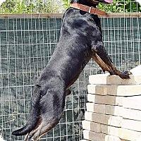 Adopt A Pet :: Tiki - Toronto, ON