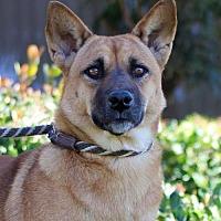Adopt A Pet :: Joy - San Diego, CA