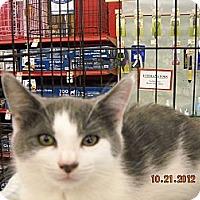 Adopt A Pet :: Justin - Riverside, RI