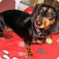 Adopt A Pet :: Gracie2 - Toronto, ON