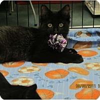 Adopt A Pet :: Jack - Sterling Hgts, MI