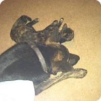 Adopt A Pet :: Doc - Austin, AR