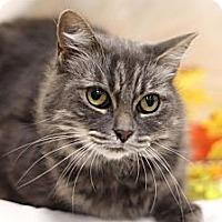 Adopt A Pet :: Madre - Sacramento, CA