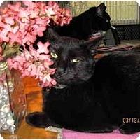 Adopt A Pet :: Layla - Catasauqua, PA
