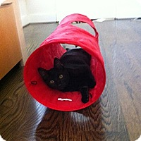 Adopt A Pet :: Jessie - Beverly Hills, CA