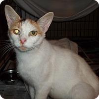 Adopt A Pet :: Lomasi - Acme, PA