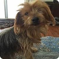 Adopt A Pet :: Rocco - Hardy, VA