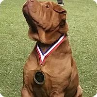 Adopt A Pet :: Shay - CGC - adopt pending - Mira Loma, CA