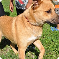 Adopt A Pet :: Harold - Lewisville, IN