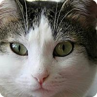 Adopt A Pet :: Basil - Chino Hills, CA