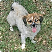 Adopt A Pet :: Prissie - Lufkin, TX