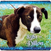 Labrador Retriever/Hound (Unknown Type) Mix Dog for adoption in Dillon, South Carolina - Dillon
