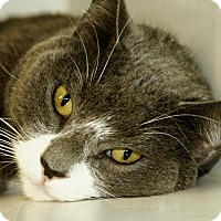 Adopt A Pet :: Jenga - Newtown, CT