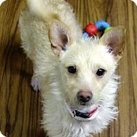 Adopt A Pet :: Wilbur - Arlington, VA