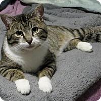 Adopt A Pet :: Jonas - Baltimore, MD
