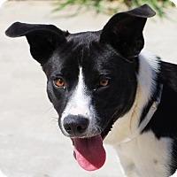 Adopt A Pet :: Loner - Toccoa, GA