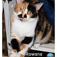 Adopt A Pet :: Rowana - South Bend, IN