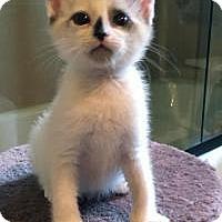 Adopt A Pet :: Michaela - Mission Viejo, CA