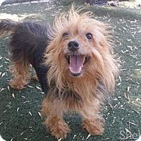 Adopt A Pet :: Merida - Meridian, ID