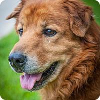 Adopt A Pet :: Zoe 705 - Naples, FL