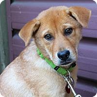 Adopt A Pet :: Rory - Los Angeles, CA