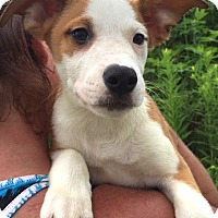 Adopt A Pet :: Asher - Medora, IN