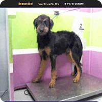 Adopt A Pet :: Aleman - Denver, CO