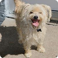 Adopt A Pet :: Dryden - Woonsocket, RI