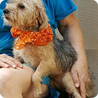 Adopt A Pet :: Annie - Baileyton, AL