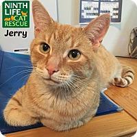 Adopt A Pet :: Jerry - Oakville, ON