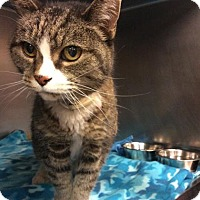 Adopt A Pet :: Delight - Janesville, WI