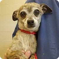 Adopt A Pet :: Simon #162478 - Apple Valley, CA