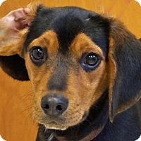 Adopt A Pet :: Sammy - Sprakers, NY