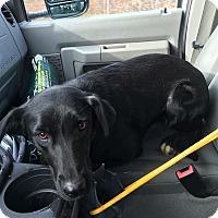 Adopt A Pet :: Trinity - Jay, NY