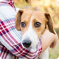 Adopt A Pet :: Lola - Elkton, FL